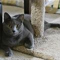 arbol para gatos sencillo