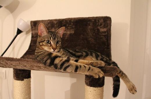 arbol para gatos precio