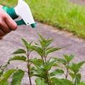 mejor herbicida para quitar malas hierbas