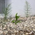 ¿cuál es el mejor herbicida para maleza?