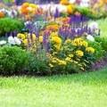 eliminador de plantas leñosas