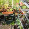 invernaderos de jardin