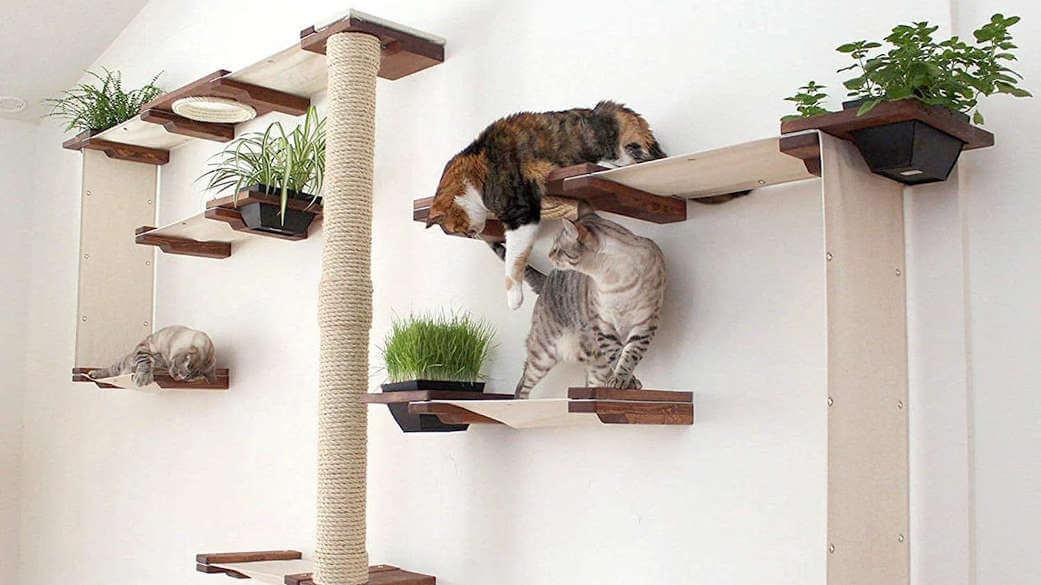 mejor arbol rascador para gatos