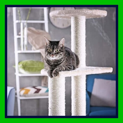 mejor árbol para gatos