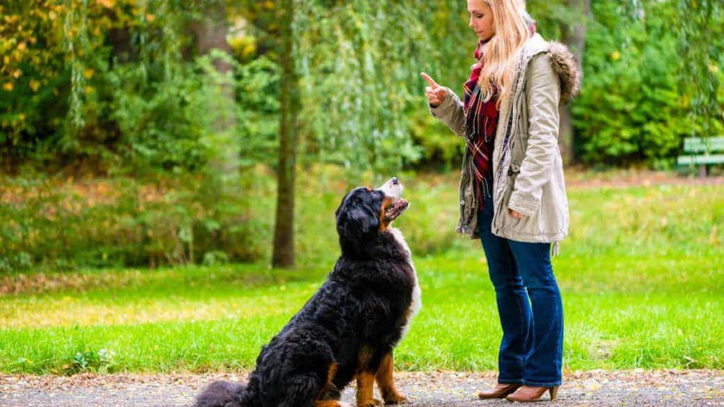 collares perros adiestramiento