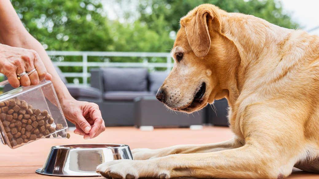 cual es la mejor marca de pienso para perros