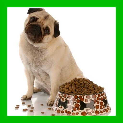 mejores piensos secos para perros